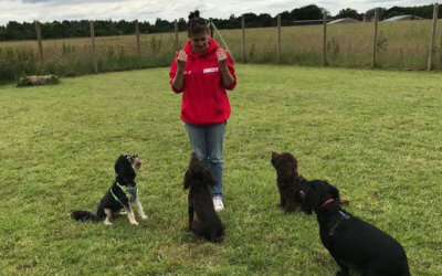 Tails from a Dog Trainer – Things that go bang!