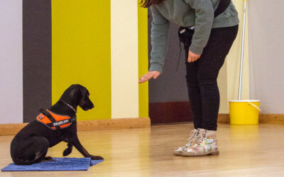 Tails from a Dog Trainer – Jumping Puppies