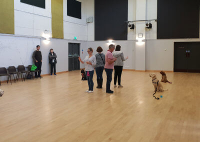 adult-dog-training-derby