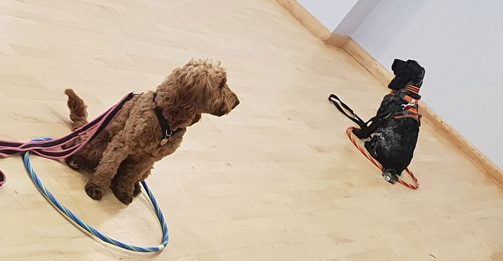 dog-training-classes-02