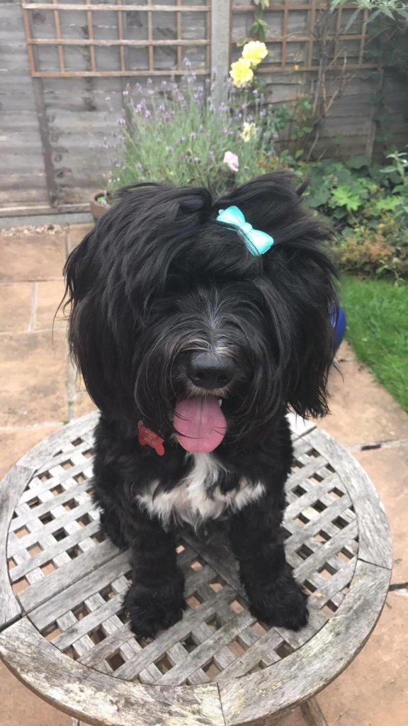 naughty-puppy-training